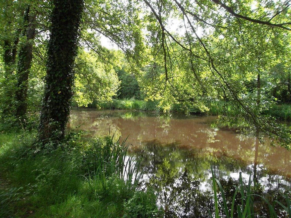 bord de l'étang